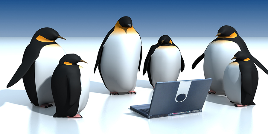 evolutie update penguin